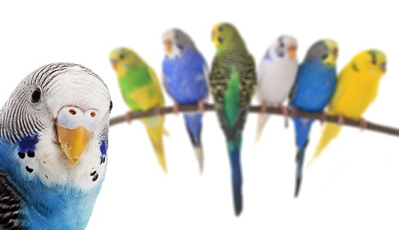 Pet Bird - Ware Pet Products